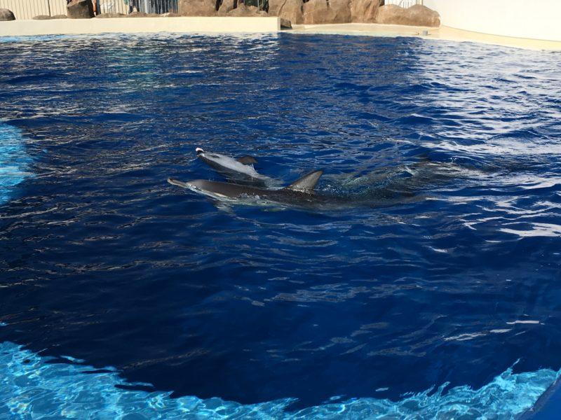 あそびーち(うみたまご)でイルカが泳ぐ様子